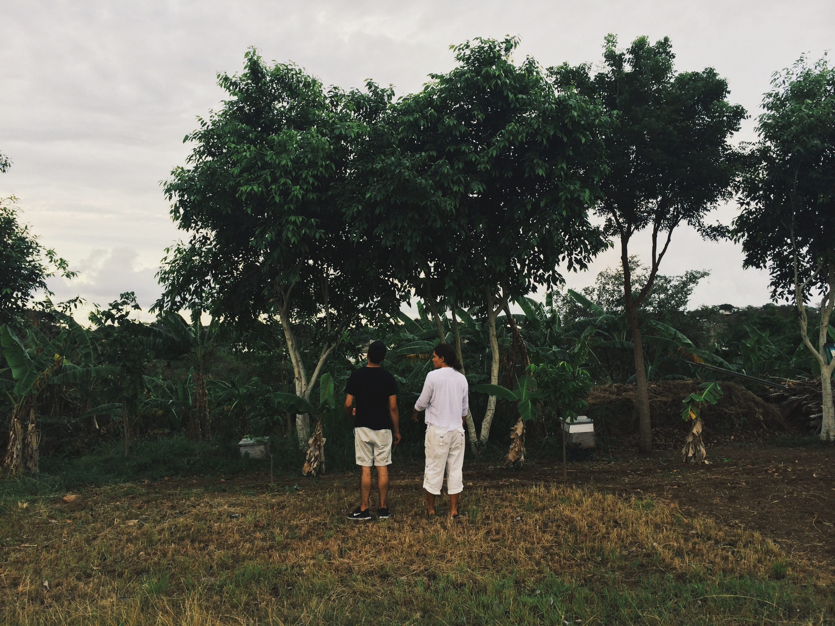 two people standing by banana grove