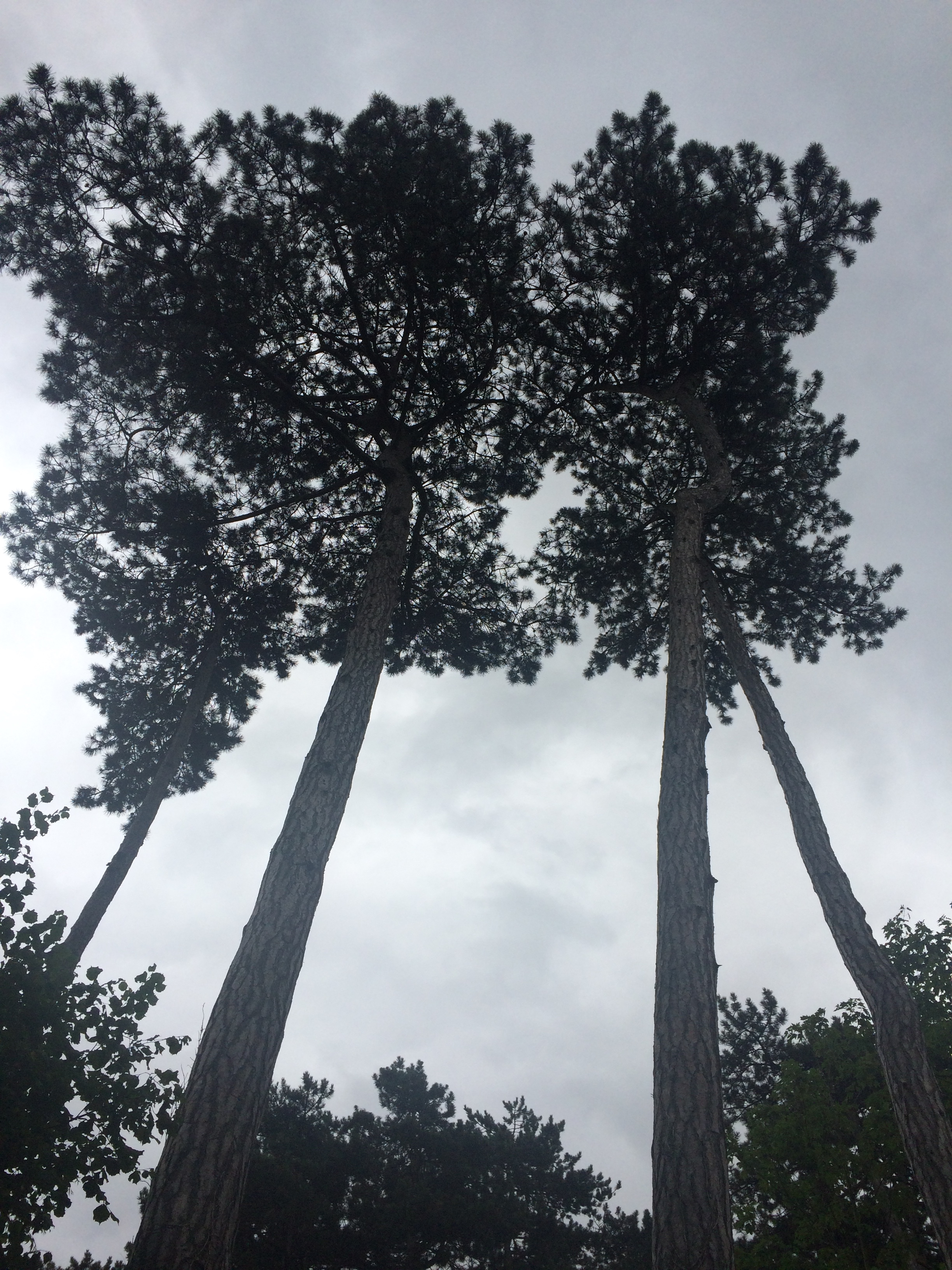 view of trees from beneath