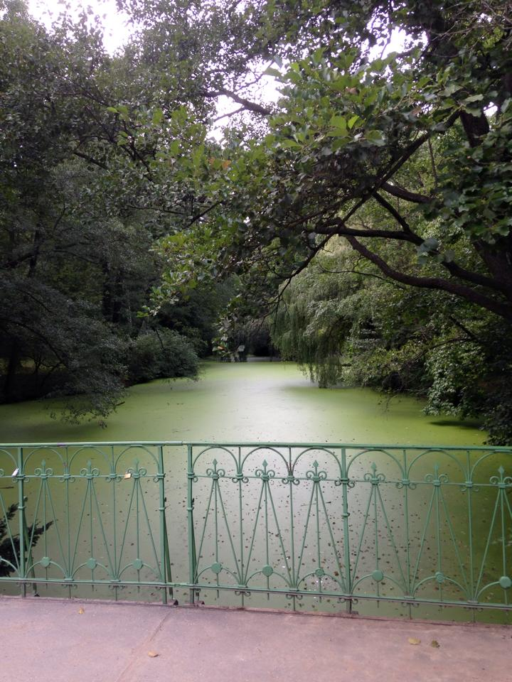bridge in front of green water and trees