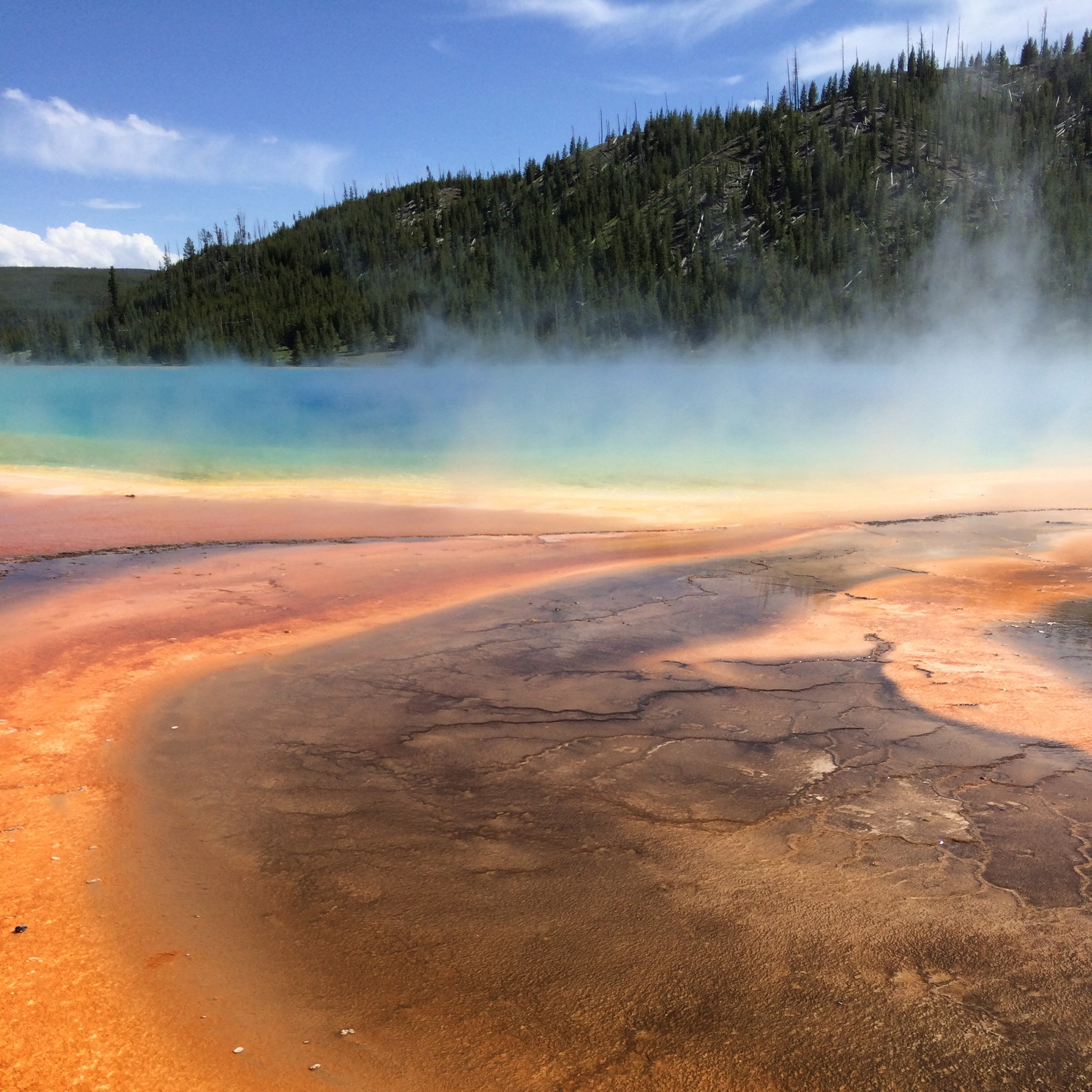 hot springs with trees in background (The Grand Prismatic Spring in Yellowstone National Park)